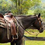 良い馬との旅は…