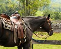 IMAGE: Good horses make short miles.