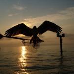 能ある鷹は爪を隠す…