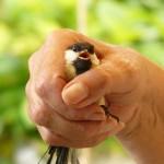 A bird in hand…
