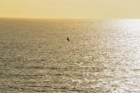 IMAGE: Alone, alone, all, all alone! / Alone on a wide, wide sea! //