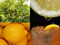 IMAGE: If life gives you lemons, make (some) lemonade. [If life gives you a lemon, (just) make (a) lemonade.]