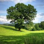 木ほど美しい、詩に…