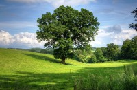 IMAGE: I think that I shall never see / A poem lovely as a tree. //...// Poems are made by fools like me, / But only God can make a tree. //