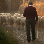 良い羊飼いは羊の毛を…