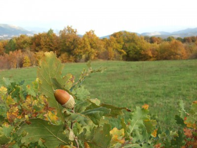 IMAGE: The creation of a thousand forests is in one acorn.