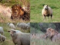 IMAGE: An army of sheep led by a lion would defeat an army of lions led by a sheep. / I am more afraid of an army of 100 sheep led by a lion than an army of 100 lions led by a sheep.