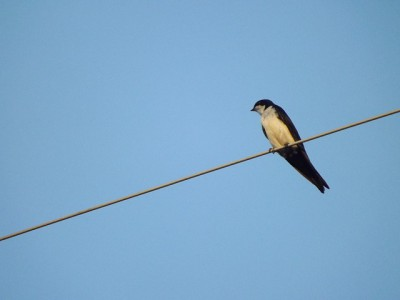 IMAGE: One swallow does not make a summer.