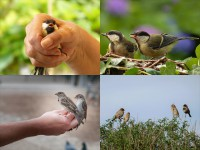 IMAGE: A bird in the hand is worth two in the bush.