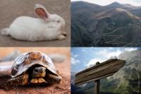 IMAGE: Slow and steady wins the race. [Slow but steady wins the race.]