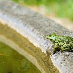 The frog in the well…