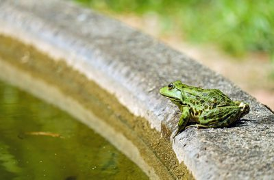 IMAGE: The frog in the well does not know the ocean. / He that stays in the valley shall never get over the hill.