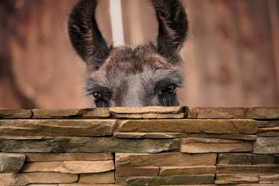 IMAGE: Walls have ears. / Hedges have eyes and walls have ears.