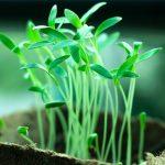 He who plants a tree…