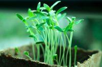 IMAGE: He who plants a tree plants a hope.