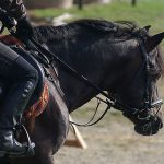 Bridle passions and…
