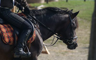IMAGE: Bridle passions and be yourself a free man.