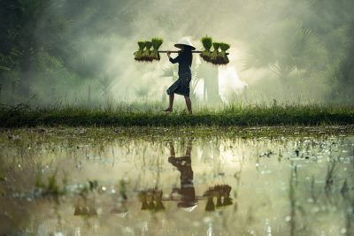 IMAGE: Striving for success without hard work is like trying to harvest where you haven't planted.