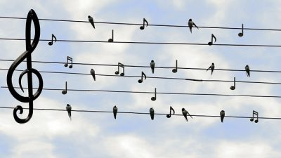 IMAGE: Each bird loves to hear himself sing.