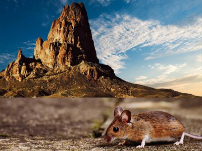 IMAGE: The mountains have brought forth a mouse. (Don't make much ado about nothing.)