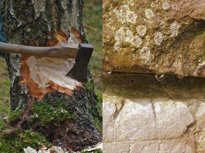 IMAGE: Little strokes fell great oaks.
