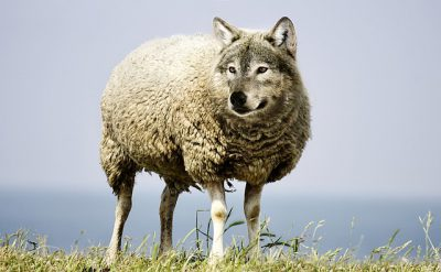 IMAGE: To strip the wolf of his sheep skin.