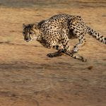 He that runs fast…