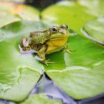 古池や 蛙飛び込む…